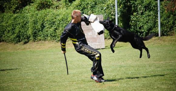 Schutzhundsport 2
